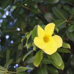 Una bonita flor amarilla